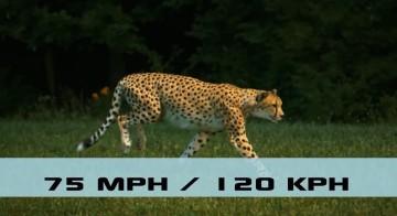 top fastest animals