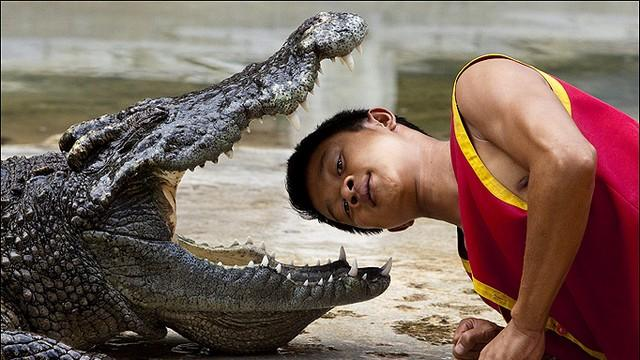 crocodile-wrestler_tn